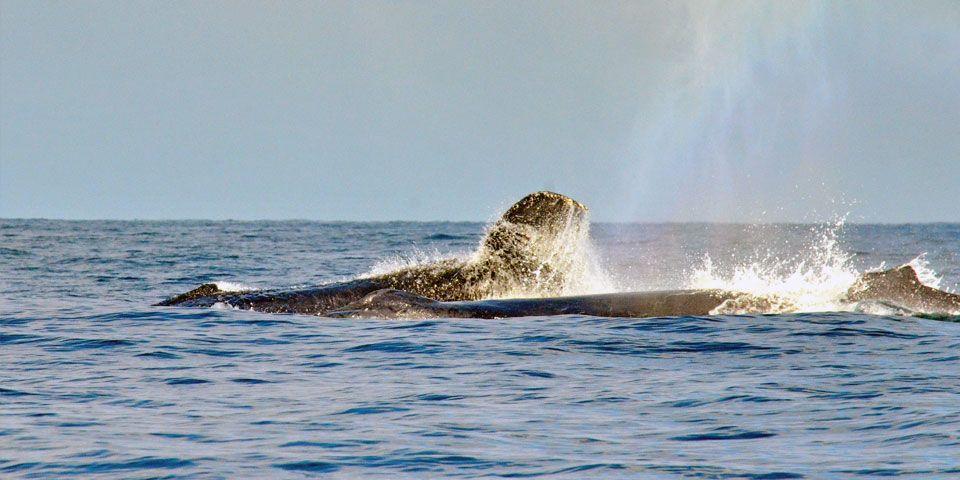 tour-whale.jpg